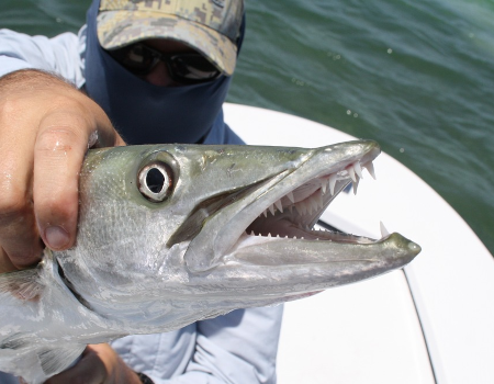 Destin Barracuda Fishing Charter