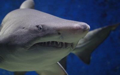 Catching Sharks in Destin, Florida