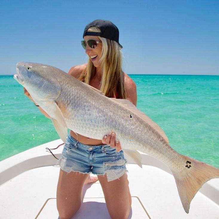 Hammerhead Sharks in Destin, Florida