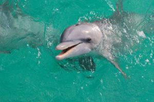 Destin Florida offshore fishing